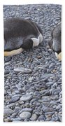 Two King Penguins By Alan M Hunt Beach Towel by Alan M Hunt