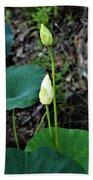 Two White Lotus Flower Buds Beach Towel