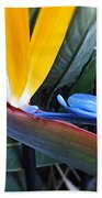 Vibrant Bird Of Paradise #2 Beach Towel