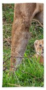 What Could Be Cuter Than A Baby Lion Cub? Beach Towel