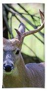 White Tailed Buck Portrait I Beach Towel