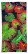 Yellow Pond Lily, Weminuche Wilderness Beach Towel