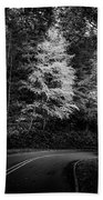 Yellow Tree In The Curve In Black And White Beach Towel