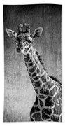 Young Giraffe Black And White Beach Towel