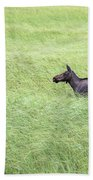 Young Moose Beach Towel