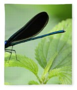 Black Winged Damselfly 7261 Fleece Blanket