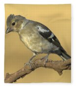 Female Chaffinch Fleece Blanket