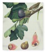 - Fico Fetifero And Fico Dell Osso Fleece Blanket