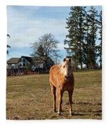 Horse Unbrideled Fleece Blanket