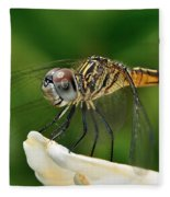 Austrogomphus Dragonfly Fleece Blanket