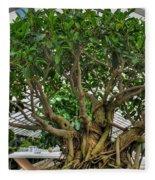 001 Bonsai Summer Show Buffalo Botanical Gardens Series Fleece Blanket