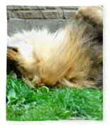 001 Lazy Boy At The Buffalo Zoo Fleece Blanket
