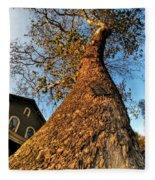 001 Oldest Tree Believed To Be Here In The Q.c. Series Fleece Blanket