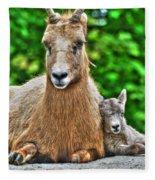 002 Nap Time At The Buffalo Zoo Fleece Blanket