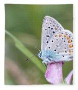 02 Common Blue Butterfly Fleece Blanket
