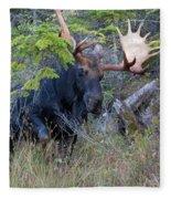 0339 Bull Moose 3 Fleece Blanket