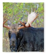 0341 Bull Moose Fleece Blanket