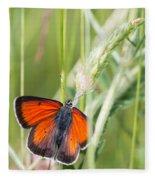 07 Balkan Copper Butterfly Fleece Blanket