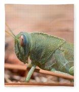 08 Egyptian Locust Grasshopper Fleece Blanket