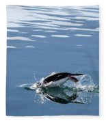 A Penguin Swims Through The Clear Fleece Blanket