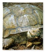 African Spurred Tortoise Fleece Blanket