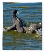 American Coots Fighting Fleece Blanket