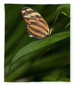 An Isabella Butterfly Eueides Isabella Fleece Blanket