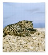 Arabian Leopard Panthera Pardus 1 Fleece Blanket