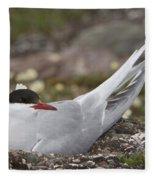 Arctic Tern In Its Nest Fleece Blanket