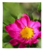 Aster From The Daylight Mix Fleece Blanket