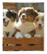 Australian Sheepdog Puppies Fleece Blanket