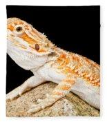 Bearded Dragon Pogona Sp. On Rock Fleece Blanket