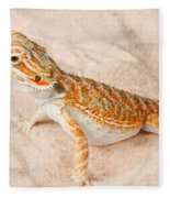 Bearded Dragon Pogona Sp. On Sand Fleece Blanket