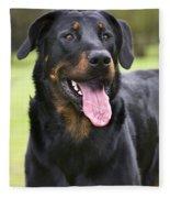 Beauceron Dog Fleece Blanket
