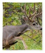 Beautiful Mule Deer Buck With Velvet Antler  Fleece Blanket