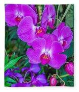 Beautiful Purple Orchid - Phalaenopsis Fleece Blanket