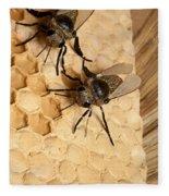 Bee Hive Fleece Blanket