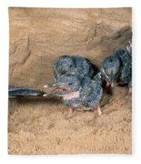 Belted Kingfisher Fleece Blanket