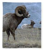 Big Horn Sheep 2 Fleece Blanket