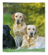 Black And Yellow Labrador Retrievers Fleece Blanket