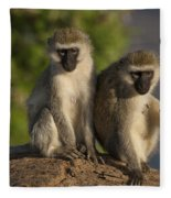Black-faced Vervet Monkey Fleece Blanket