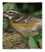 Black-headed Grosbeak Female Fleece Blanket
