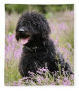 Black Labradoodle Fleece Blanket