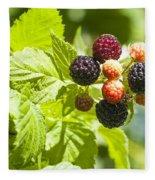 Black Raspberries 2 Fleece Blanket