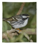 Blackpoll Warbler Fleece Blanket