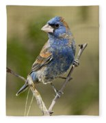 Blue Grosbeak Fleece Blanket