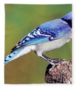 Blue Jay Fleece Blanket