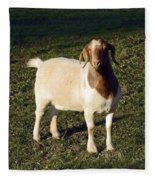 Boer Goat  Fleece Blanket