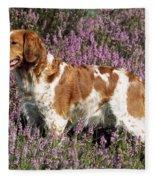 Brittany Spaniel Or Epagneul Breton Fleece Blanket