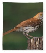 Brown Thrasher Fleece Blanket